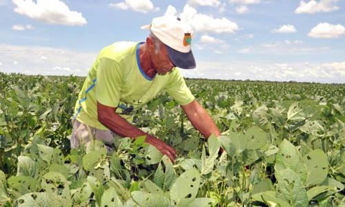 No Tocantins, agricultores familiares vão produzir matéria prima para biodiesel