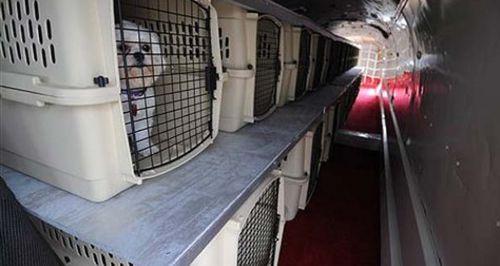 Passaporte para cães e gatos chega com objetivo de reduzir burocracia