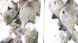 PROCON Tocantins orienta o consumidor sobre a compra de pescado