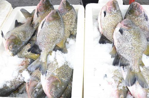 Prefeitura orienta e fiscaliza comércio de pescados na Semana Santa