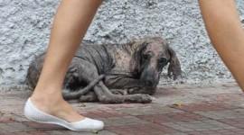 Prefeitura conscientiza população a entregar animais com Calazar