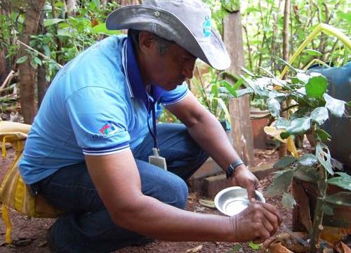 Araguaína recebe recomendação para implantar ações de combate e prevenção à microcefalia