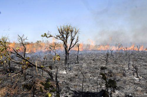 Dia D de combate a queimadas em Araguaína