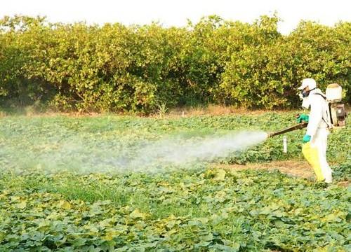 Sindicato Rural de Araguaína apoia conscientização de proteção ao Meio Ambiente