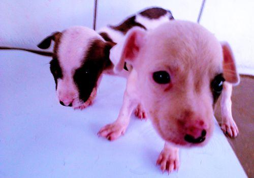 Oito animais estão disponíveis para adoção no CCZ de Araguaína