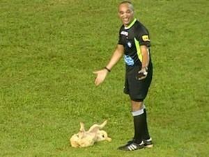 Cão deita e rola enquanto árbitro tenta tirá-lo do gramado no Tocantinense