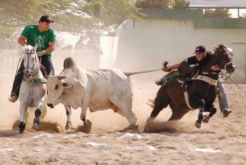 Vaquejada poderá ganhar estatuto de esporte no Tocantins