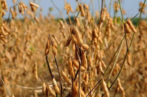 Com total de R$ 5,525 bilhões, Tocantins ocupa 14ª colocação do ranking nacional de Valor Bruto da Produção Agropecuária