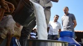 Tocantins tem potencial para ampliar exportação de leite