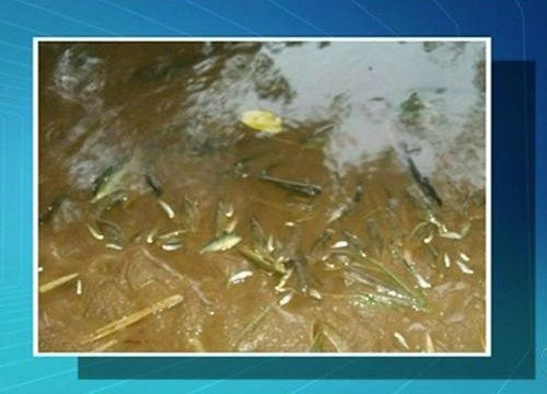 Moradores registram morte de peixes no rio Lontra, em Araguaína