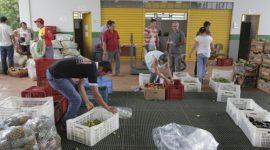 Mais de 300 agricultores familiares são aprovados no Compra Direta