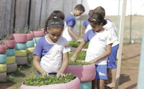Hortas sustentáveis ajudam na educação alimentar e pedagógica dos alunos