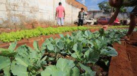Projeto de ressocialização conta com horta da parceria entre Prefeitura e Judiciário