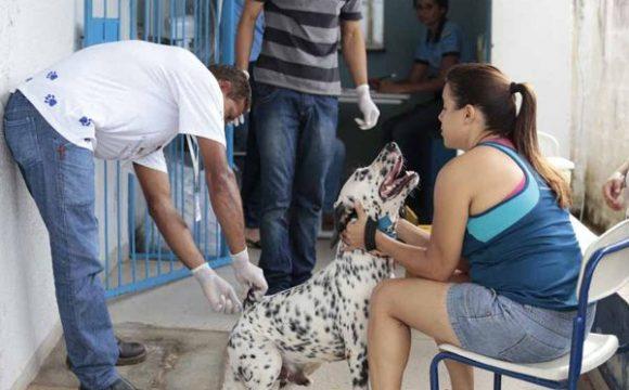 Começa a campanha de vacinação antirrábica em Araguaína