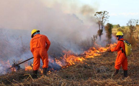 Brigadistas municipais auxiliam Corpo de Bombeiros no combate aos incêndios