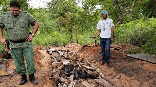Fiscais ambientais de Araguaína desarticulam produção de carvão clandestina